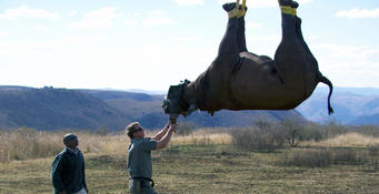 How Do You Airlift A Rhinoceros