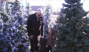 The magic of the Christmas Tree Project