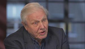 Sir David Attenborough, the voice of Nature