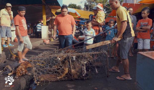 Indonesia Animal Cruelty