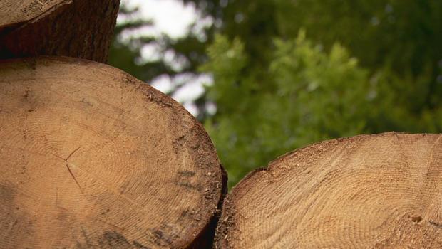 violin-making-alpine-spruce-logs-620.jpg