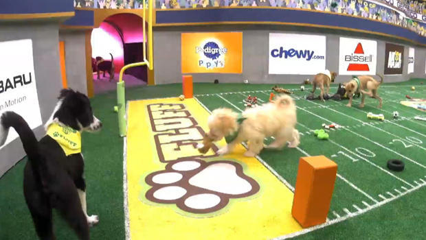 puppy-bowl-touchdown-620.jpg