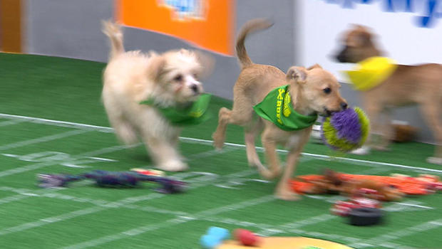 puppy-bowl-puppies-on-run-620.jpg