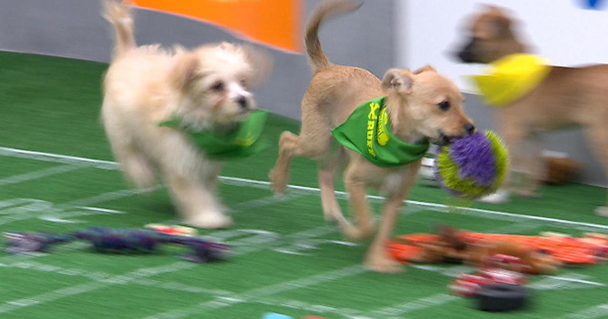 Puppy Bowl 2018 Behind The Scenes With Mr Wigglesworth And The