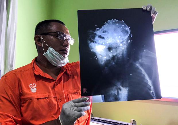 Indonesia Orangutan Killing