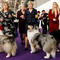 Handlers wait to enter the competition ring during Day One of competition at the Westminster Kennel Club 142nd Annual Dog Show in New York