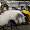 Rembrandt, an Old English Sheepdog breed, is groomed in the benching area on Day One of competition at the Westminster Kennel Club 142nd Annual Dog Show in New York