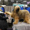 Jambo, a Briard breed, is groomed in the benching area on Day One of competition at the Westminster Kennel Club 142nd Annual Dog Show in New York
