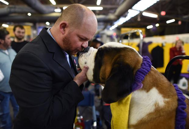US-ANIMAL-WESTMINSTER-DOG-SHOW