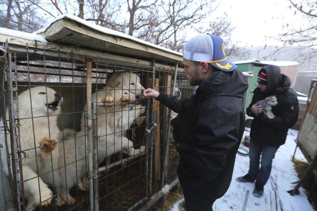 South-korea-dog-farm-ap-18054232568405