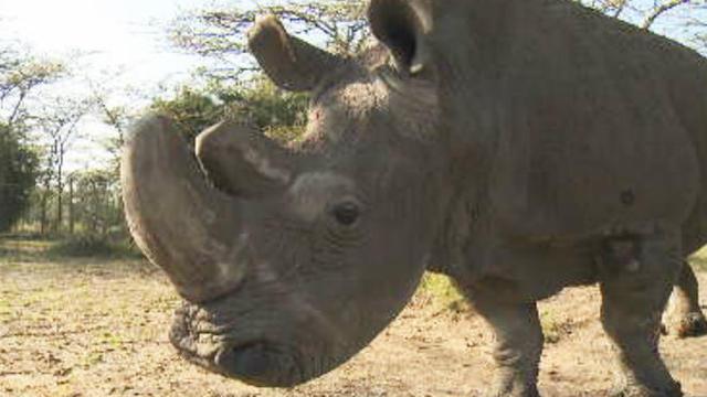 last-male-white-rhino-promo.jpg