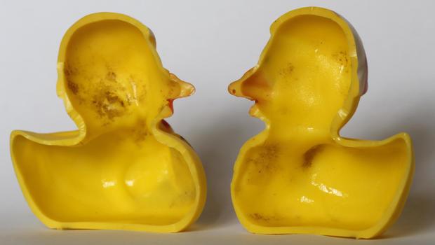 Switzerland Rubber Duckies