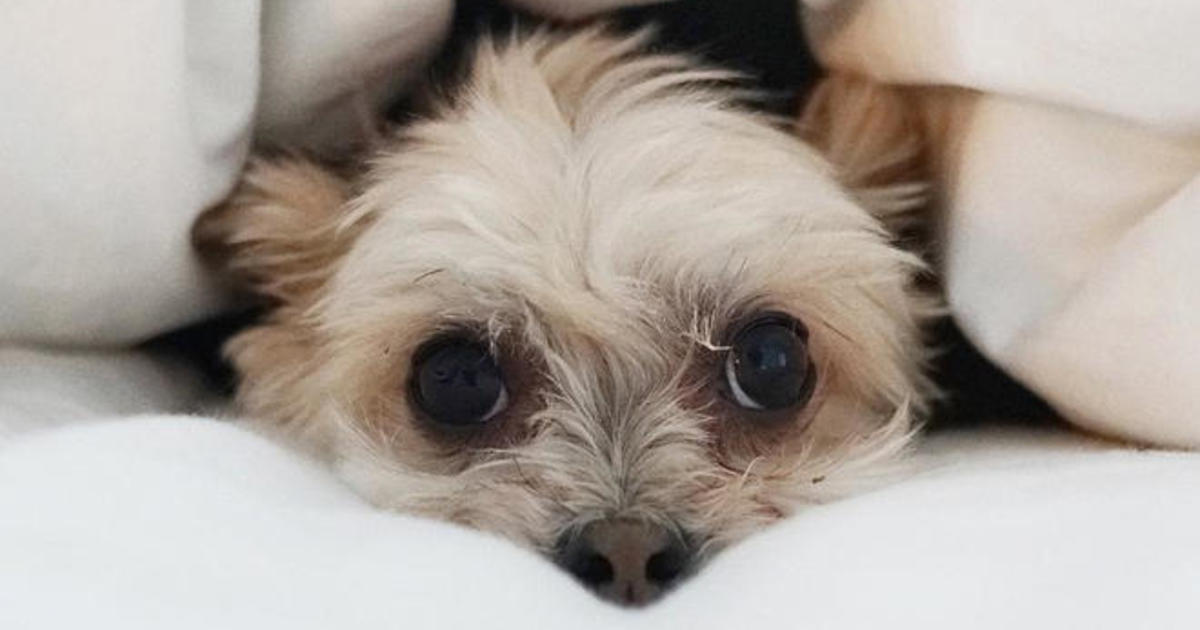 Animal influencers: How popular pets on Instagram launch careers