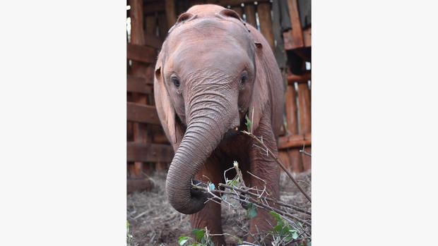 ot-elephantorphanageh1.jpg
