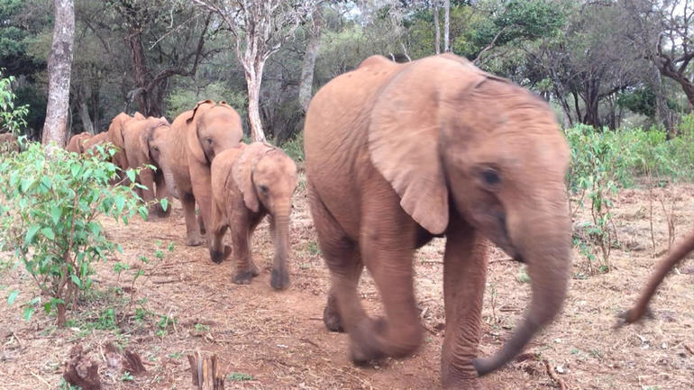 Daphne Sheldrick: Saying goodbye to the queen of the elephants - CBS ...