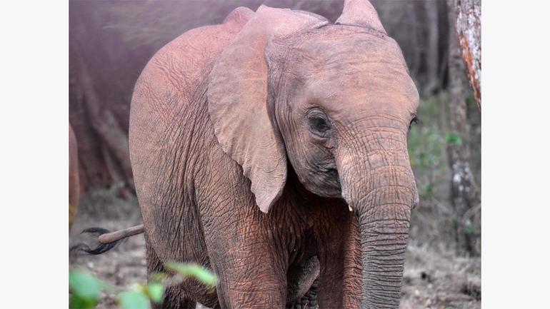 ot-elephantorphanagee1.jpg