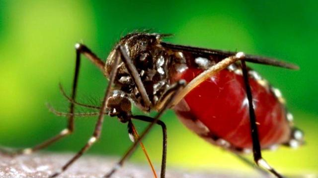 0501-en-mosquito-lapook-1559455-640x360.jpg