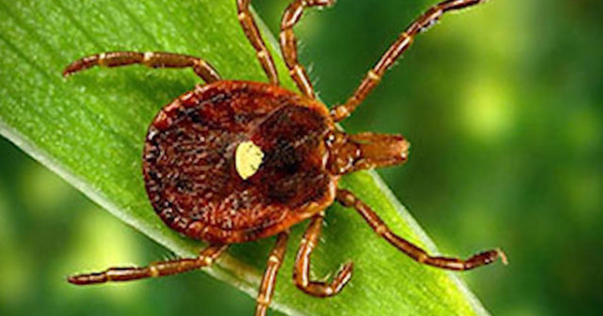 More people developing red meat allergy from tick bites