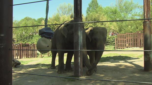 c-reid-nat-zoo-elephants-needs-trks-frame-952.jpg