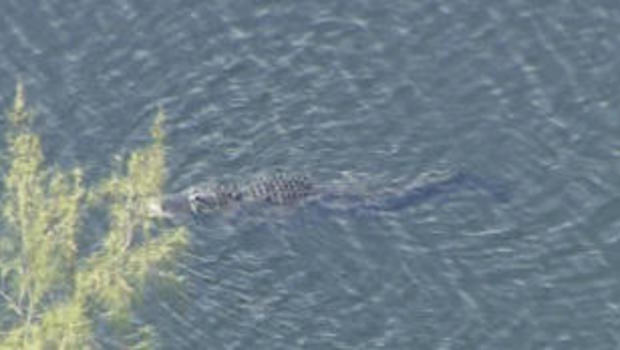 Witness saw gator drag woman into Florida lake, police say