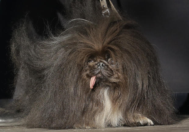 APTOPIX World's Ugliest Dog