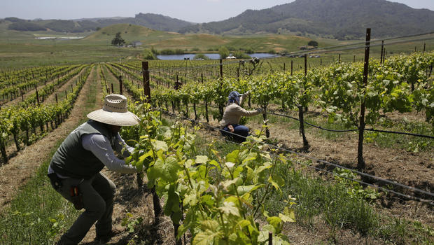 How wineries from Oregon to France are adapting to climate change ...