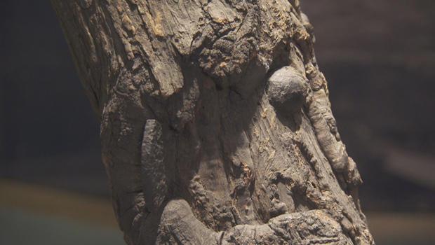 witness-tree-specimen-bullet-620.jpg