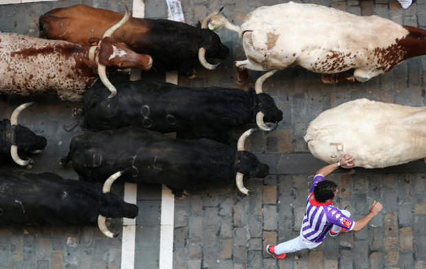 A reveller sprints along a pack of bulls and steers during the fourth running of the bulls of the San Fermin festival in Pamplona