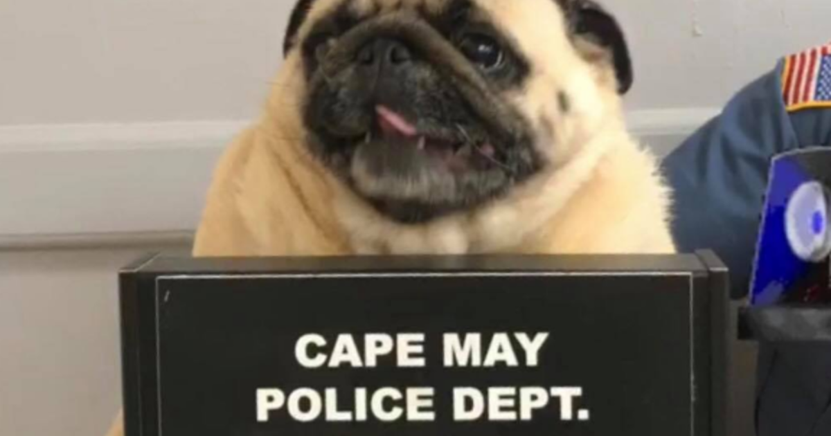 This Dog Lived A Pug Life In New Jersey Town Now Her