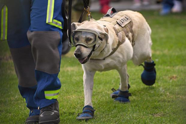 MEXICO-QUAKE-RESCUE DOGS-ACKNOWLEDGMENT
