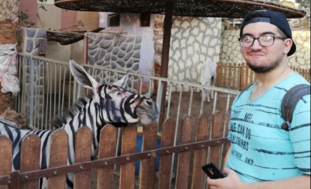 painted zebra donkey