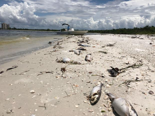 US-ENVIRONMENT-ANIMAL-OCEANS