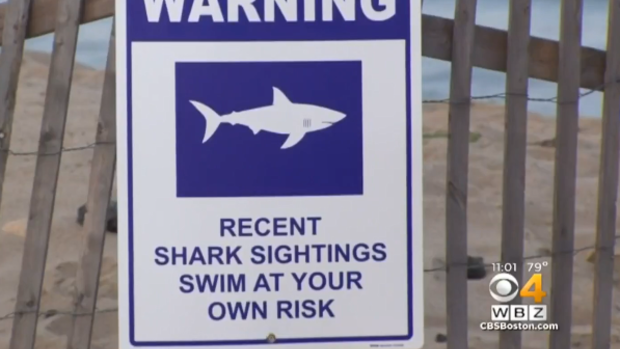 Shark attacks swimmer at Cape Cod beach - CBS News