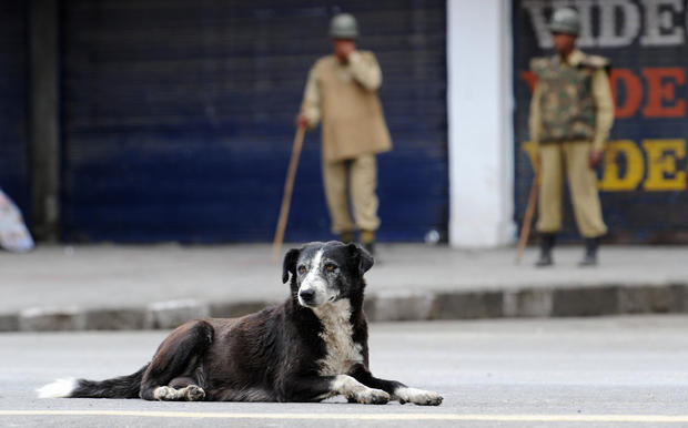 A dog lies on the street as Indian param