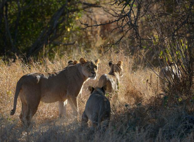 KENYA-ANIMALS-CONSERVATION-MAASAI