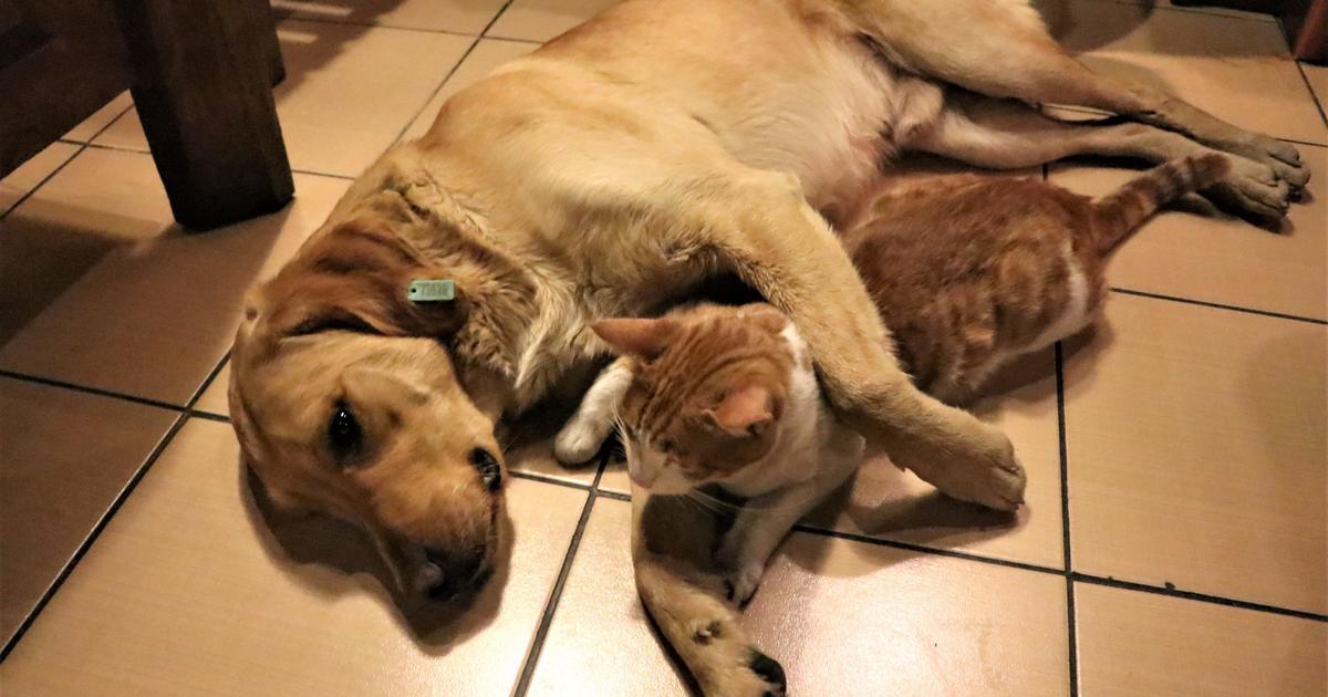 House bans eating of cats, dogs