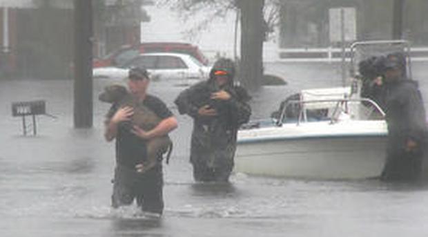 pet-rescue.png