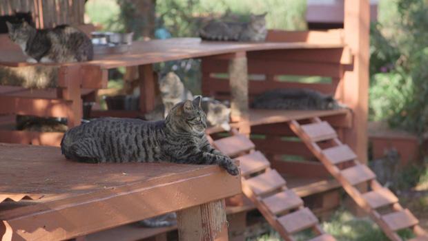 lanai-cat-sanctuary-relaxing-620.jpg