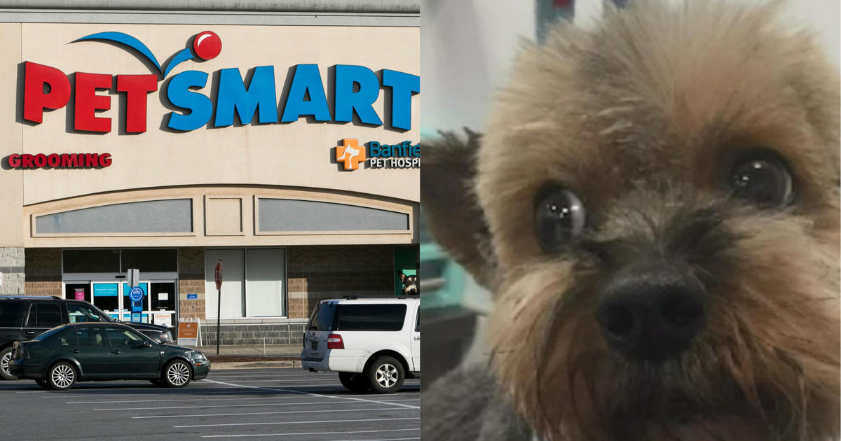 Investigation finds 47 dogs died after grooming at PetSmart over past  decade - CBS News