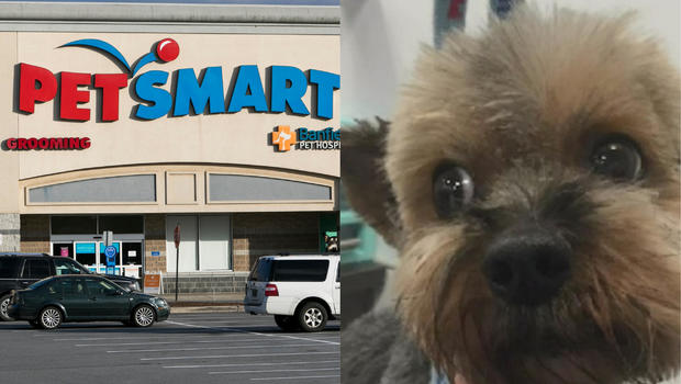 Investigation Finds 47 Dogs Died After Grooming At Petsmart Over