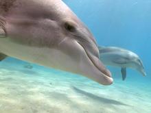 dolphin-ziggy-livnet-3-promo.jpg