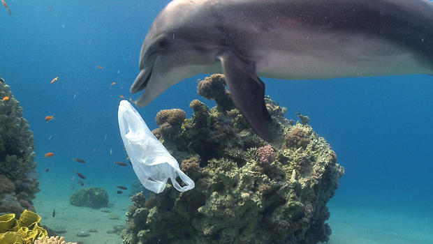 dolphin-plastic-pollution-ziggy-livnet-5-620.jpg