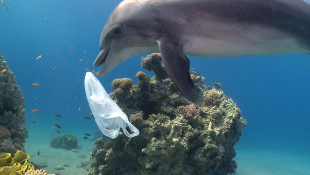 dolphin-plastic-pollution-ziggy-livnet-5-620.jpg