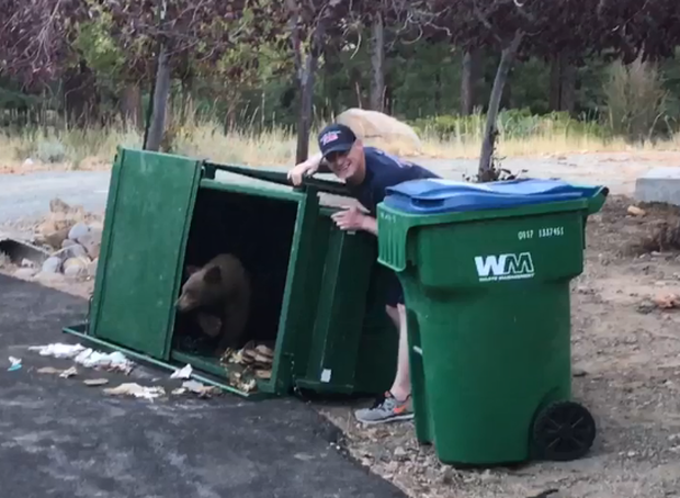 181002-bears-dumpster.png