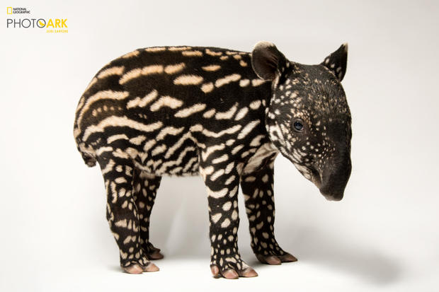 """Images from """"National Geographic"""" photographer Joel Sartore's Photo Ark project"""
