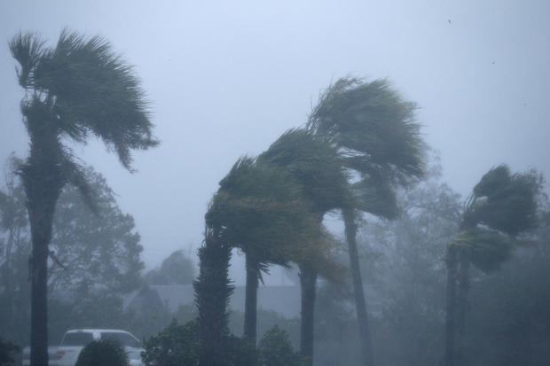 Palm trees are seen during Hurricane Michael in Panama City Beach