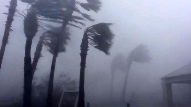 Palm trees are seen during a Hurricane Michael in Panama City