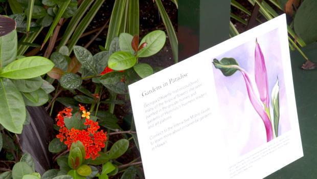 georgia-okeeffe-visions-in-hawaii-flower-show-620.jpg
