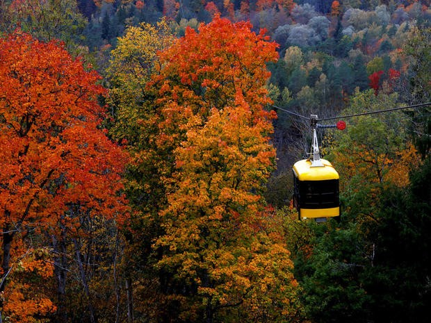 A cable car is seen next to the colored trees in Sigulda