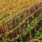 Autumns colours are seen at a vineyard in Klosterneuburg